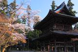 円覚寺の桜と三門