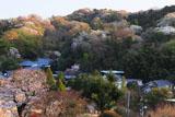 桜咲く松岡の里
