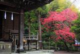 鎌倉御霊神社 拝殿とハナモモ