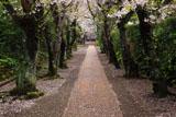 極楽寺 散花の参道