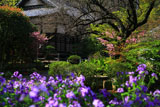 鎌倉円光寺 ショカッサイ越しの本堂