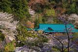 鎌倉龍宝寺の桜と庫裡