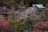 春爛漫の龍宝寺