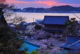 桜と材木座海岸