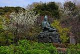 源氏山公園 大島桜と源頼朝像