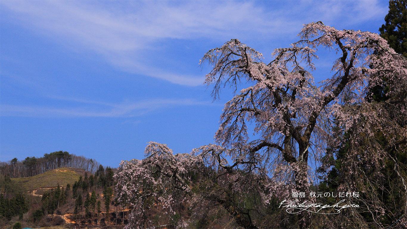 秋元のしだれ桜 壁紙
