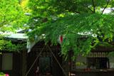鎌倉宮 新緑の社務所