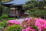鎌倉大長寺 ツツジと本堂