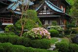 鎌倉多聞院の躑躅