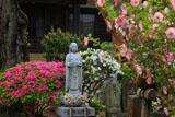 鎌倉等覚寺の躑躅と延命地蔵尊