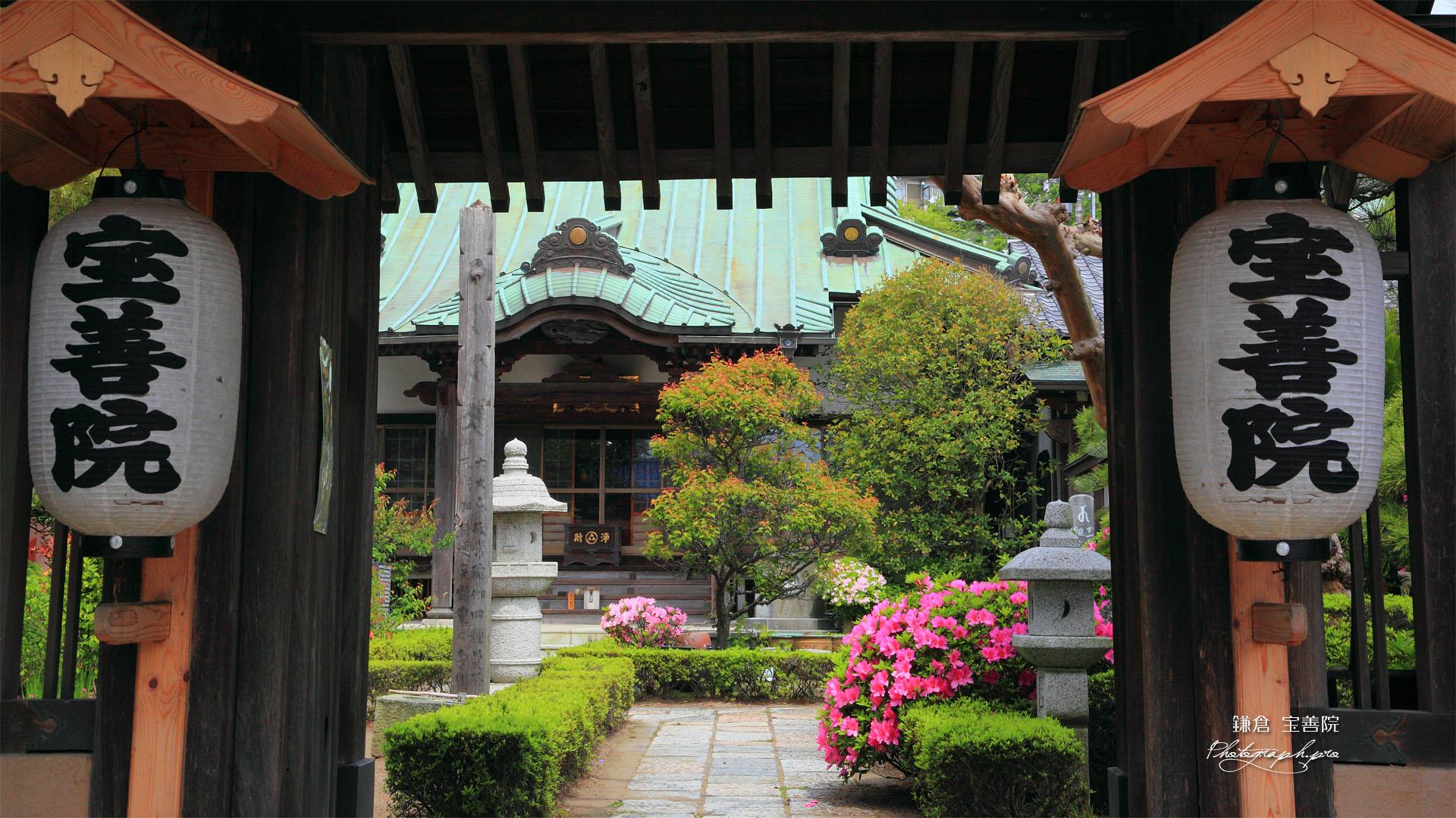 鎌倉 宝善院山門越しのツツジ