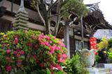 鎌倉妙典寺 躑躅と本堂