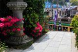 鎌倉満福寺のツツジと江ノ電