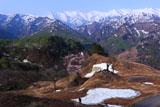 樽口峠の大山桜とカメラマン