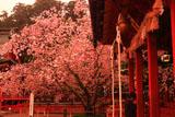 紅く染まった塩竈神社