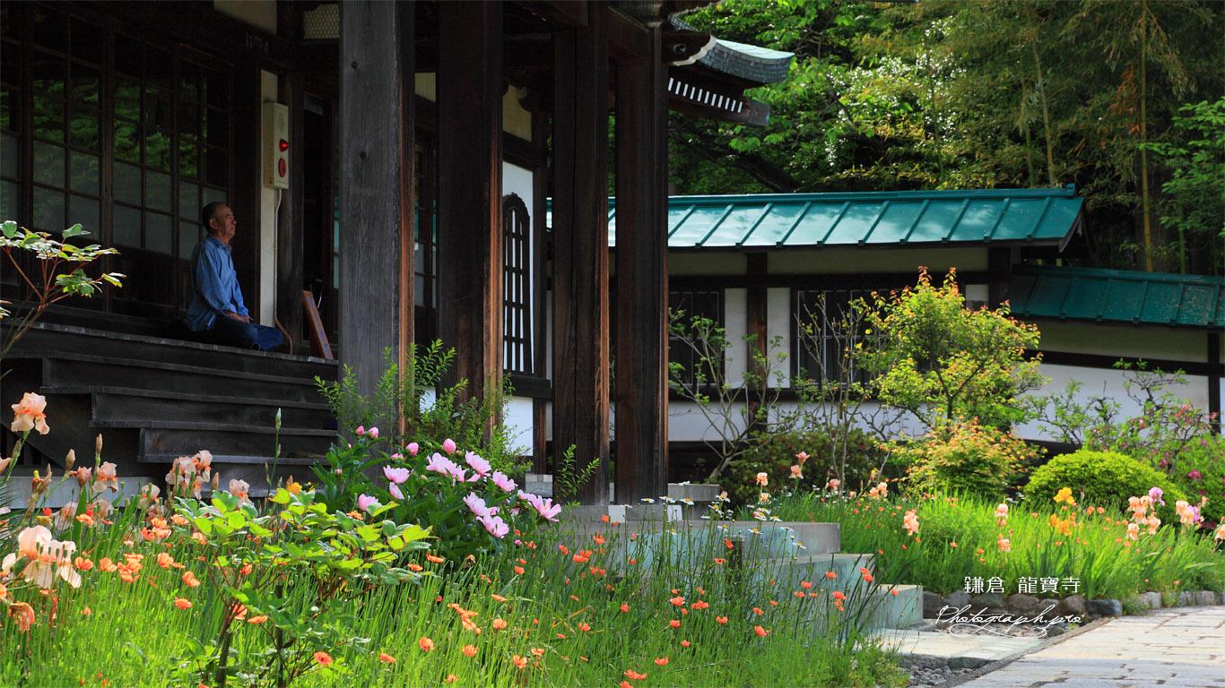 鎌倉龍宝寺本堂前の花々 壁紙