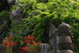 鎌倉大宝寺 石仏とヤマフジ