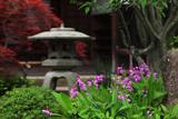 海蔵寺 シラン