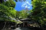 鎌倉長谷寺 新緑の地蔵堂