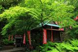 佐助稲荷神社 新緑の拝殿