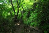 鎌倉化粧坂の新緑