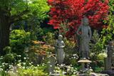 鎌倉青蓮寺 不動明王像と春モミジ