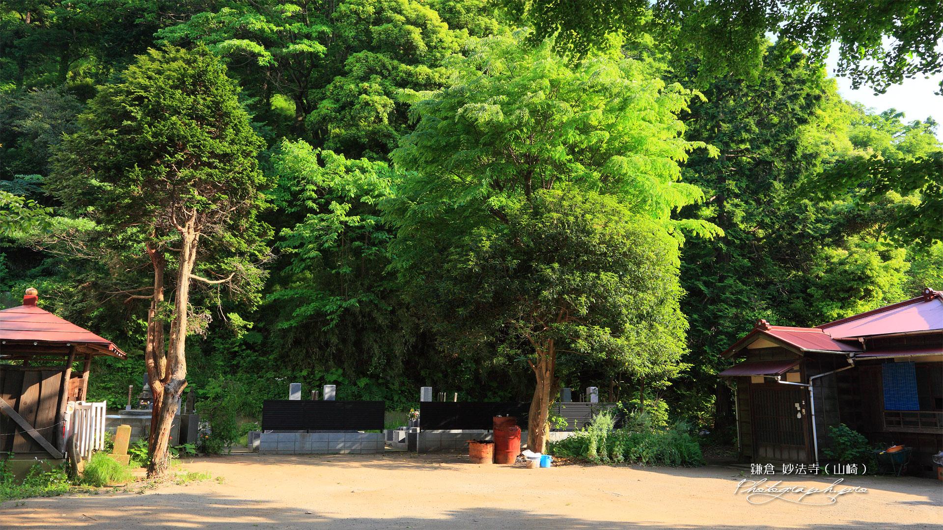 鎌倉妙法寺(山崎)の新緑