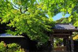 新緑の円覚寺正統院