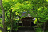 新緑の円覚寺居士林