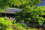 円覚寺心字池のアヤメ