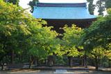 新緑の円覚寺山門