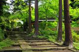 新緑の建長寺天源院参道