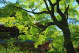 新緑の建長寺法堂