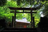 北野神社 新緑と社殿