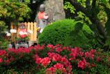 鎌倉多聞院 皐月ととげぬき地蔵