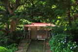 龍口明神社 旧鎮座地の紫陽花