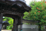 龍口寺 アメリカデイゴと山門