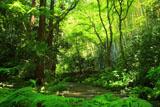 瑞泉寺 新緑の参道