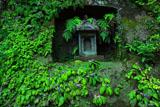 浄智寺のイワタバコ