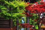玉泉寺 青紅葉と春紅葉