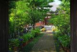 鎌倉成福寺 山門越しに参道のアジサイ