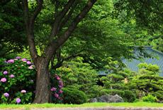鎌倉大長寺