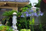 鎌倉泉光院のシラー