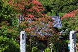鎌倉圓久寺 サルスベリと本堂