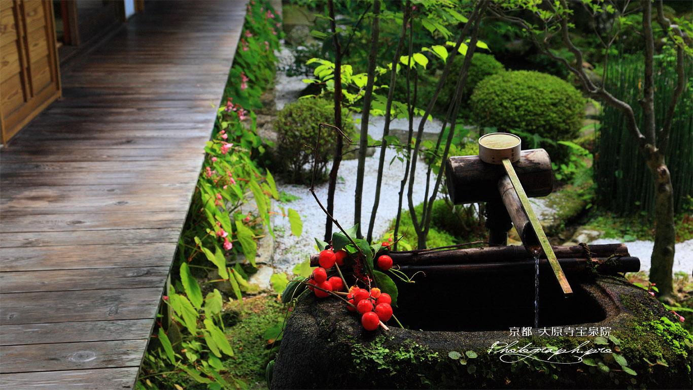 大原寺宝泉院 鶴亀庭園のカラスウリ 壁紙