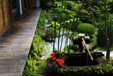 大原寺宝泉院 鶴亀庭園のカラスウリ