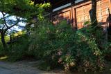 萩と真如堂本堂