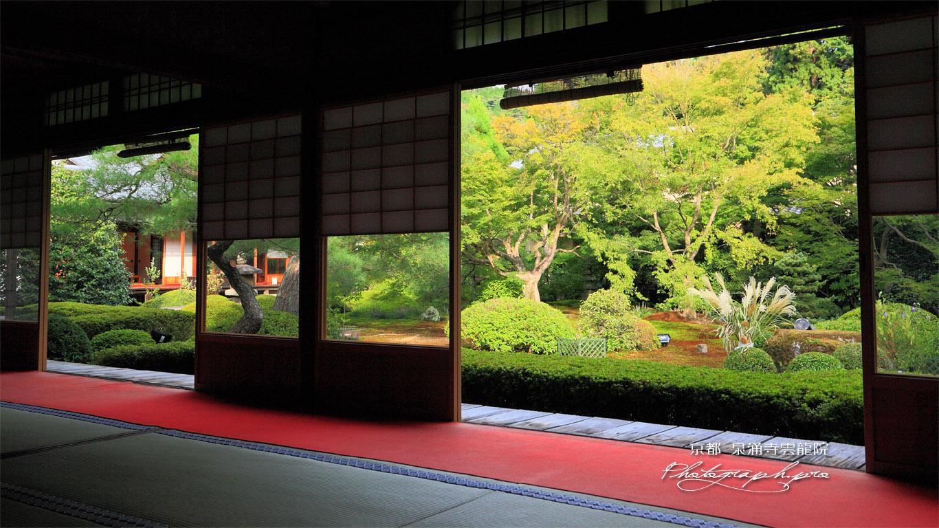 泉涌寺雲龍院 客殿から庭園のススキ 壁紙