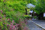 二尊院の萩と総門