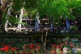 清水寺三重塔と紅葉